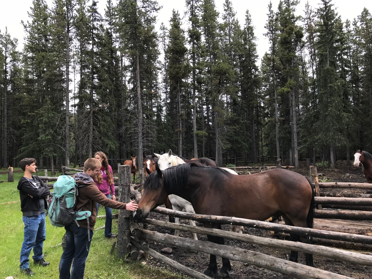 Meeting the horses